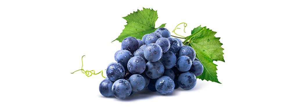 Druiven Freshweb Nl